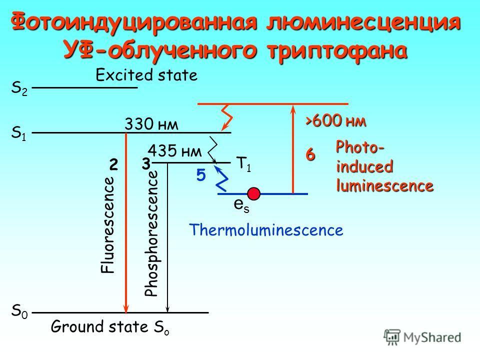 Вероятность перехода электрона через синглетный и триплетный уровни возбужденного состояния фосфоресценция флуоресценция S1S1 T1T1 EaEa H S0S0 kSkS kTkT kGkG Вывод: Высвечивание гораздо вероятнее через триплетное состояние.