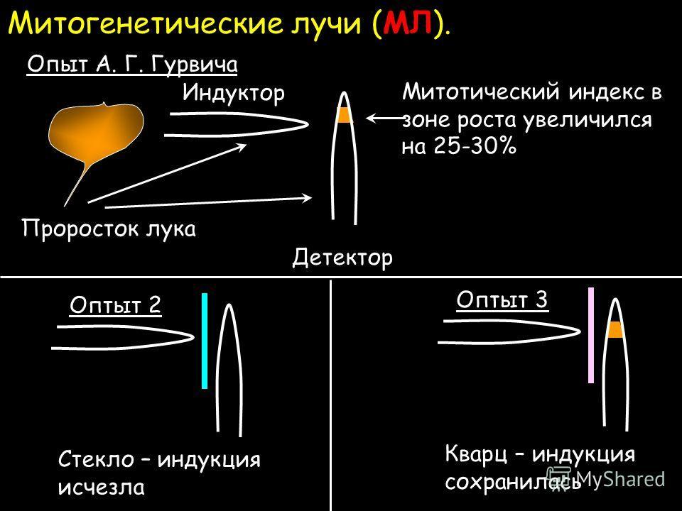 Индекс Митотический фото
