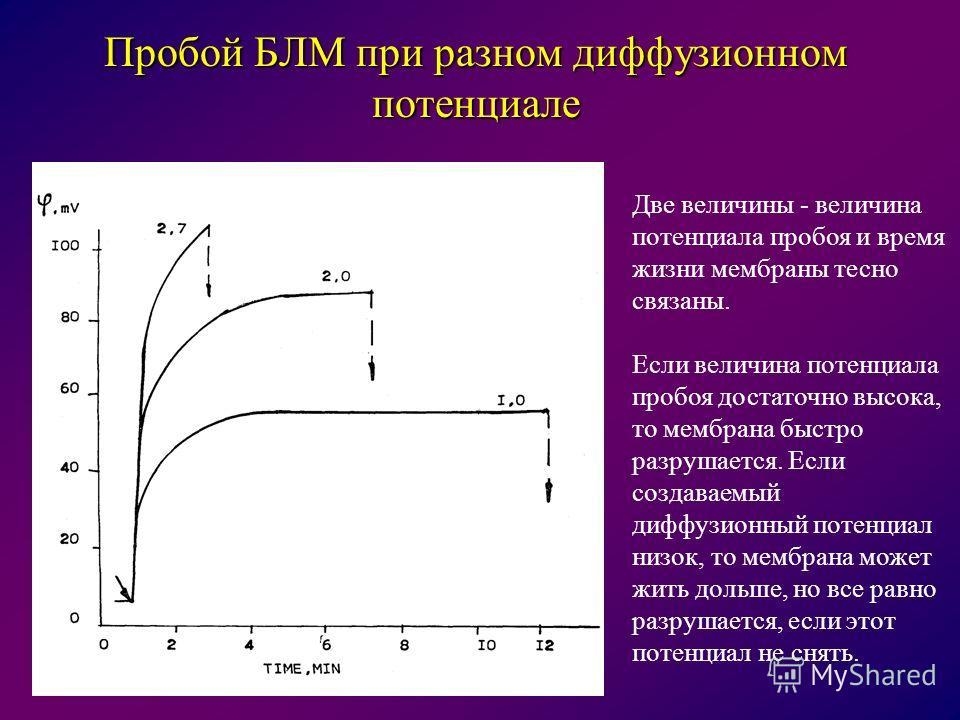 Пробой БЛМ при разном диффузионном потенциале Две величины - величина потенциала пробоя и время жизни мембраны тесно связаны. Если величина потенциала пробоя достаточно высока, то мембрана быстро разрушается. Если создаваемый диффузионный потенциал н