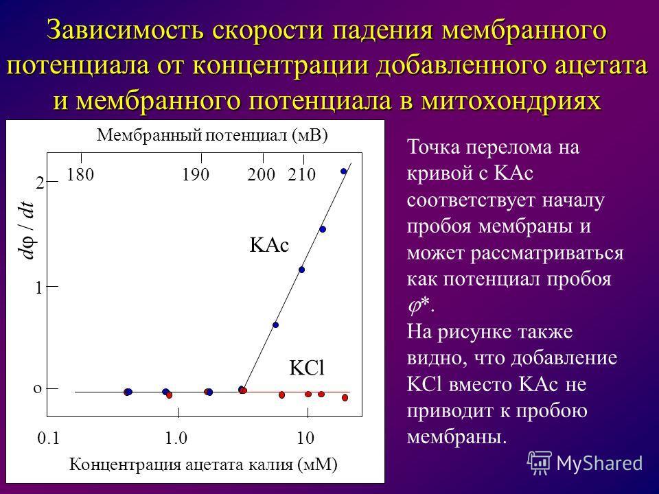o 1 2 d / dt 180190200210 Мембранный потенциал (мВ) 1.00.110 Концентрация ацетата калия (мМ) Зависимость скорости падения мембранного потенциала от концентрации добавленного ацетата и мембранного потенциала в митохондриях KAc KCl Точка перелома на кр
