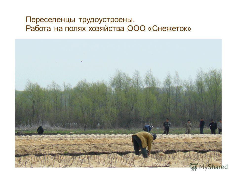 Переселенцы трудоустроены. Работа на полях хозяйства ООО «Снежеток»