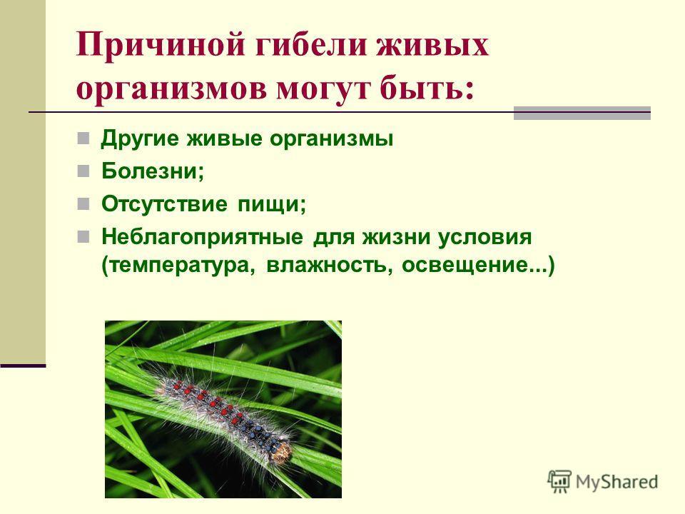 Причиной гибели живых организмов могут быть: Другие живые организмы Болезни; Отсутствие пищи; Неблагоприятные для жизни условия (температура, влажность, освещение...)
