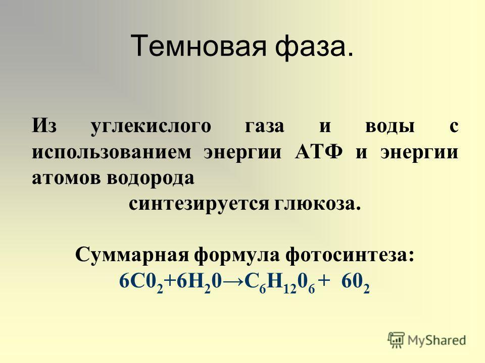 Темновая фаза. Из углекислого газа и воды с использованием энергии АТФ и энергии атомов водорода синтезируется глюкоза. Суммарная формула фотосинтеза: 6С0 2 +6Н 2 0С 6 Н 12 0 6 + 60 2