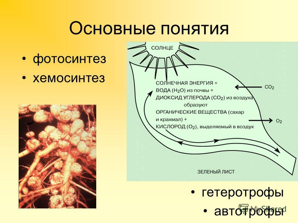 Основные понятия фотосинтез хемосинтез гетеротрофы автотрофы