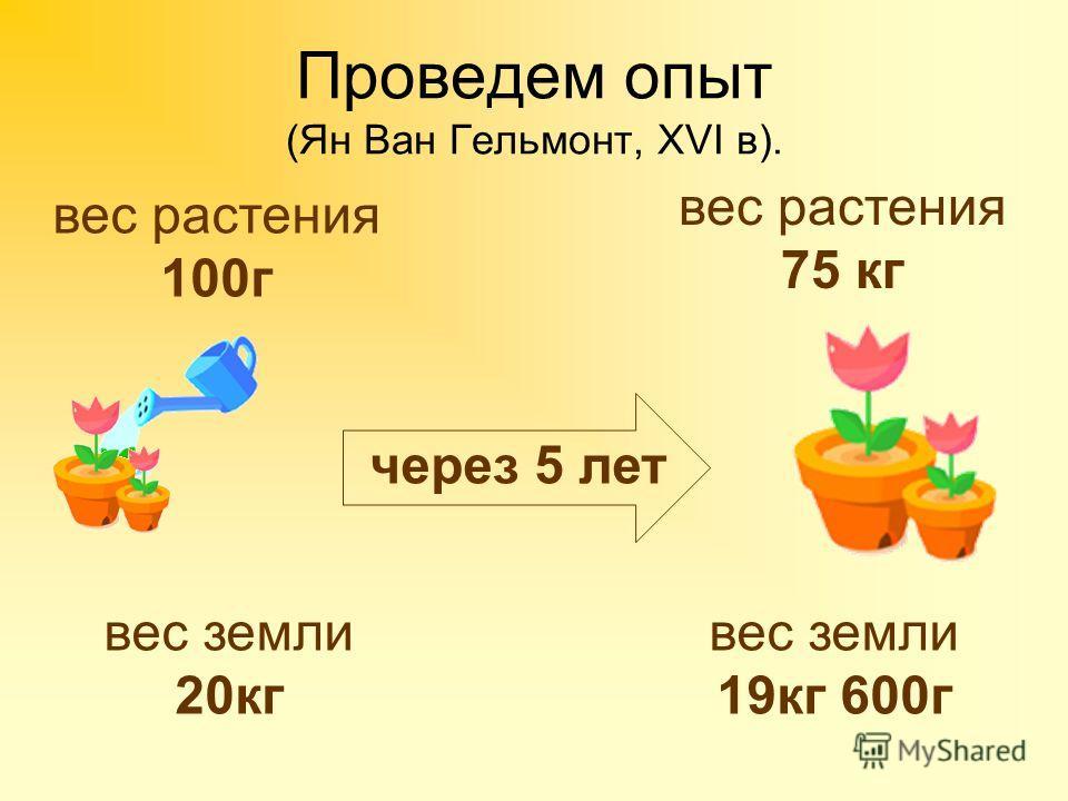 Проведем опыт (Ян Ван Гельмонт, XVI в). вес земли 20кг через 5 лет вес земли 19кг 600г вес растения 100г вес растения 75 кг