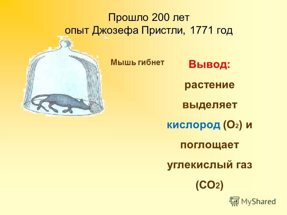Прошло 200 лет опыт Джозефа Пристли, 1771 год Мышь гибнет Вывод: растение выделяет кислород (О 2 ) и поглощает углекислый газ (СО 2 ) Мышь может жить