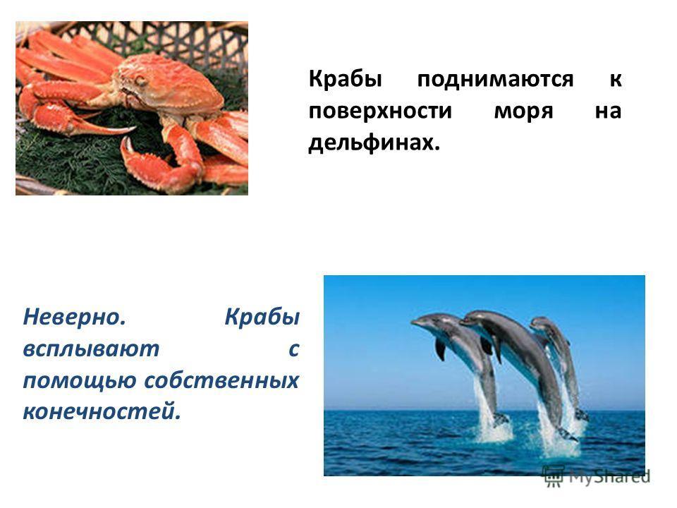 Крабы поднимаются к поверхности моря на дельфинах. Неверно. Крабы всплывают с помощью собственных конечностей.