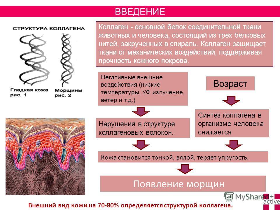Появление морщин Коллаген - основной белок соединительной ткани животных и человека, состоящий из трех белковых нитей, закрученных в спираль. Коллаген защищает ткани от механических воздействий, поддерживая прочность кожного покрова. Негативные внешн