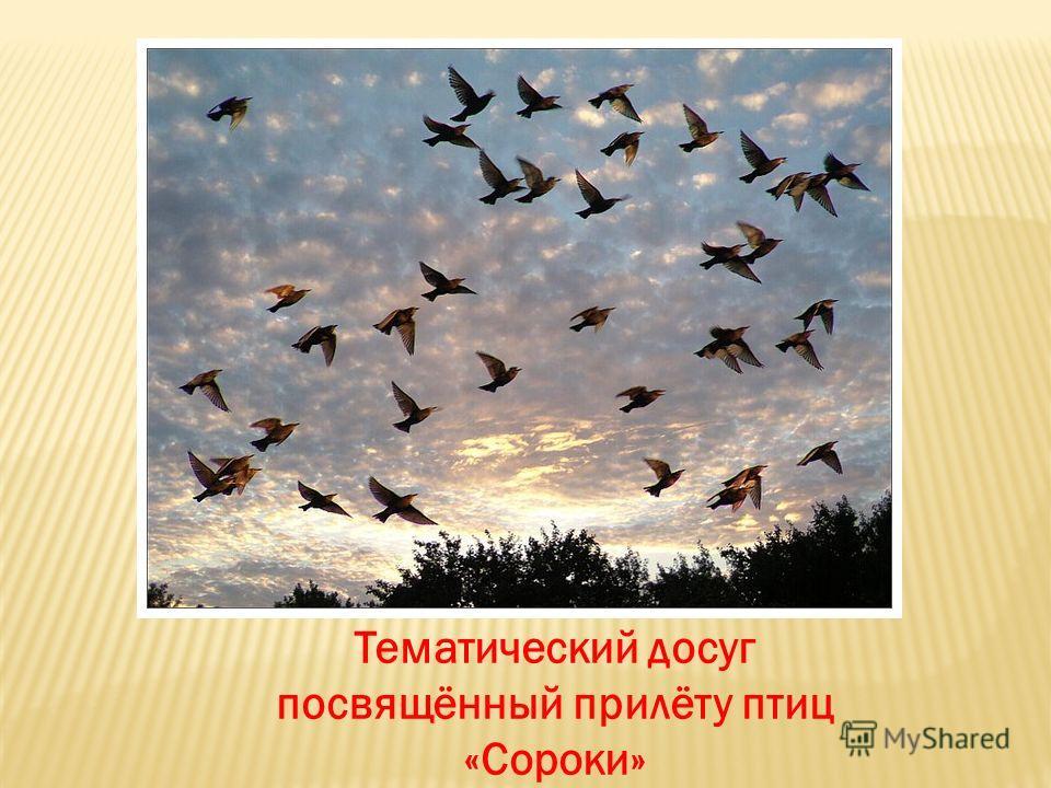 Тематический досуг посвящённый прилёту птиц «Сороки»