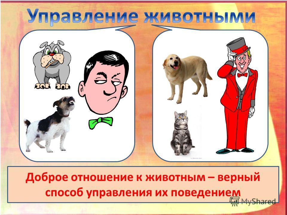 Доброе отношение к животным – верный способ управления их поведением