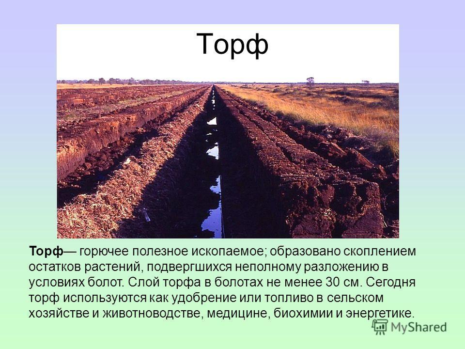 Торф Торф горючее полезное ископаемое; образовано скоплением остатков растений, подвергшихся неполному разложению в условиях болот. Слой торфа в болотах не менее 30 см. Сегодня торф используются как удобрение или топливо в сельском хозяйстве и животн