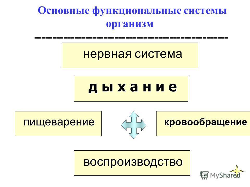 нервная система д ы х а н и е д ы х а н и е пищеварение пищеварение воспроизводство воспроизводство кровообращение кровообращение Основные функциональные системы организм -----------------------------------------------------