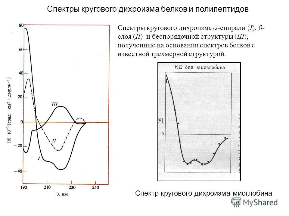 Спектры кругового дихроизма -спирали (I); - слоя (II) и беспорядочной структуры (III), полученные на основании спектров белков с известной трехмерной структурой. Спектры кругового дихроизма белков и полипептидов Спектр кругового дихроизма миоглобина