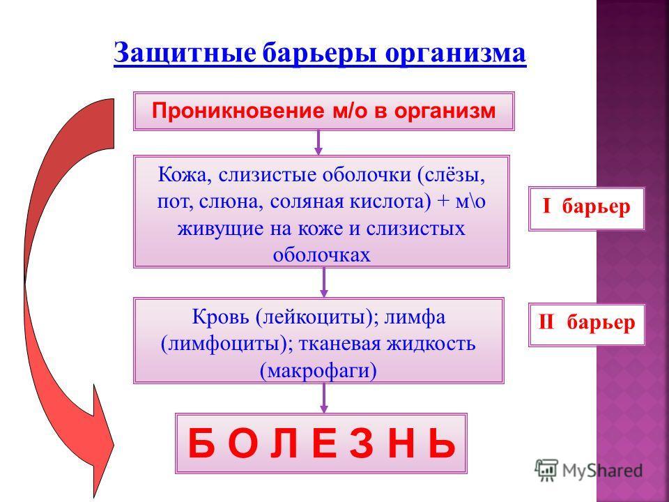 Проникновение м/о в организм Кожа, слизистые оболочки (слёзы, пот, слюна, соляная кислота) + м\о живущие на коже и слизистых оболочках Кровь (лейкоциты); лимфа (лимфоциты); тканевая жидкость (макрофаги) Б О Л Е З Н Ь I барьер II барьер Защитные барье