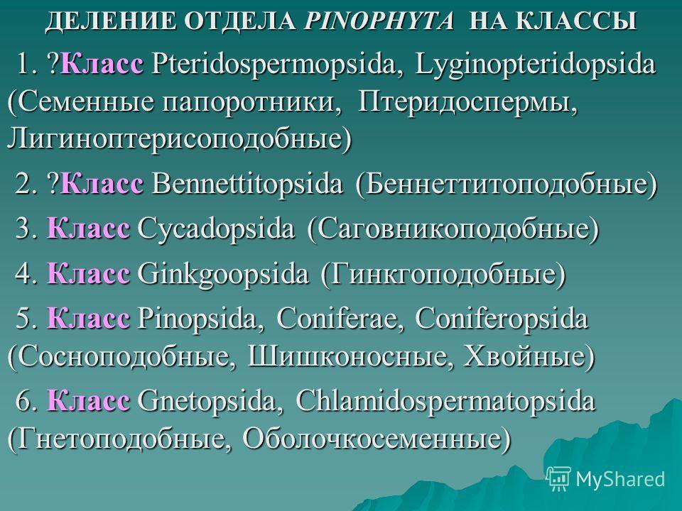 ДЕЛЕНИЕ ОТДЕЛА PINOPHYTA НА КЛАССЫ 1. ?Класс Pteridospermopsida, Lyginopteridopsida (Семенные папоротники, Птеридоспермы, Лигиноптерисоподобные) 1. ?Класс Pteridospermopsida, Lyginopteridopsida (Семенные папоротники, Птеридоспермы, Лигиноптерисоподоб