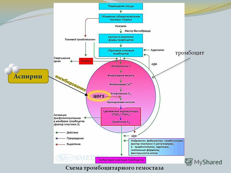 Схема тромбоцитарного гемостаза тромбоцит Аспирин ЦОГ2