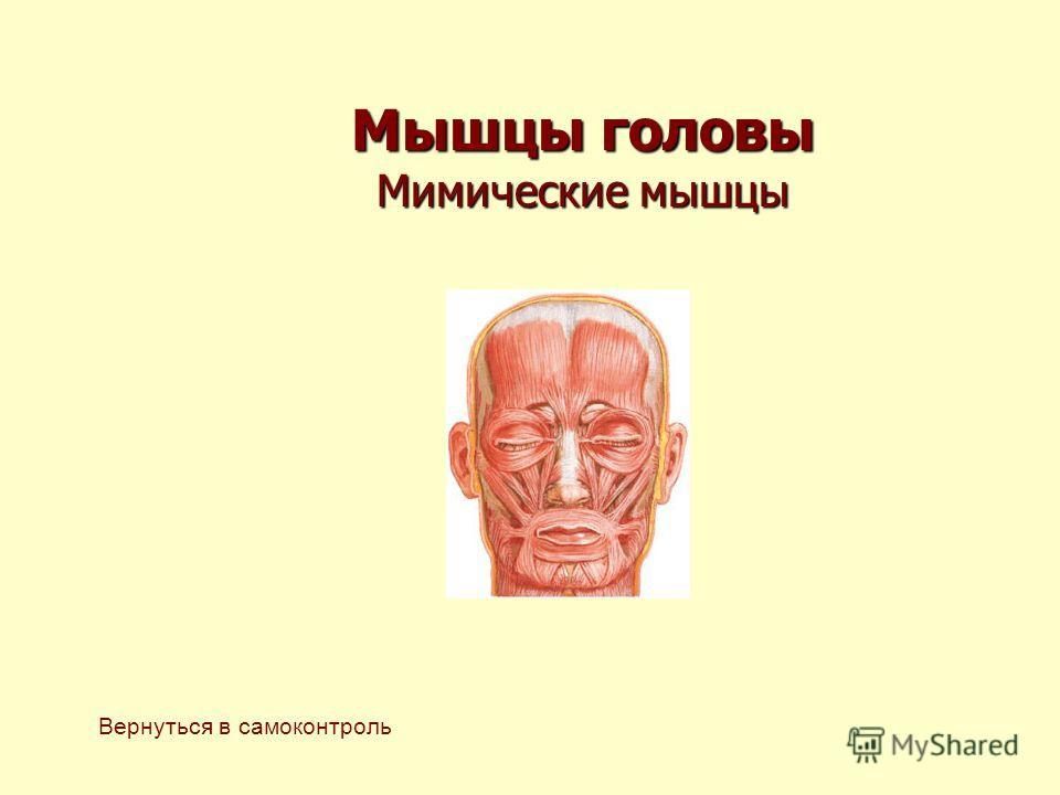 Мышцы головы Мимические мышцы Вернуться в самоконтроль