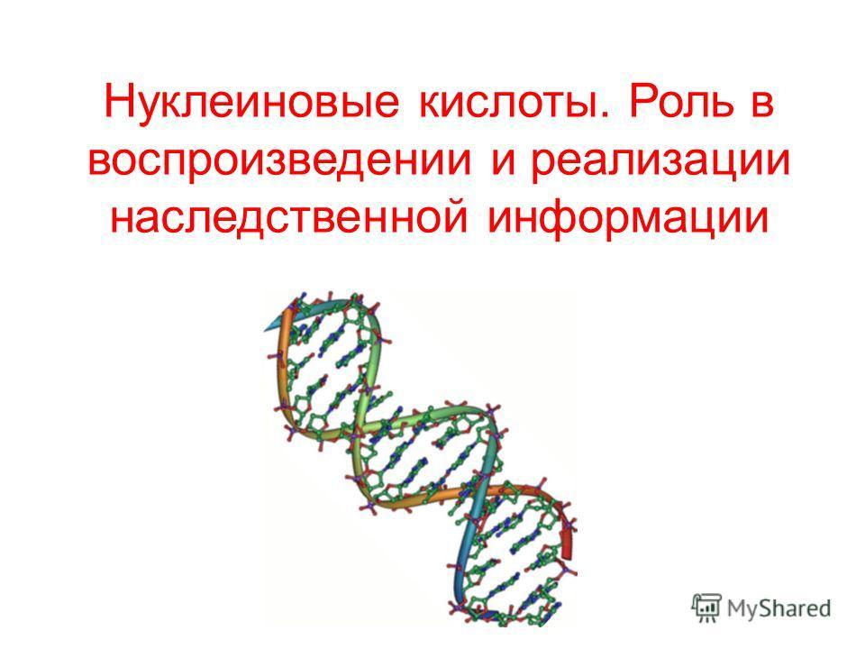 Нуклеиновые кислоты. Роль в воспроизведении и реализации наследственной информации
