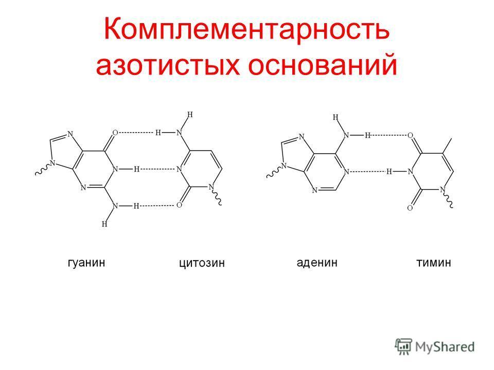 Комплементарность азотистых оснований