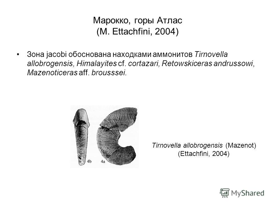 Марокко, горы Атлас (M. Ettachfini, 2004) Зона jacobi обоснована находками аммонитов Tirnovella allobrogensis, Himalayites cf. cortazari, Retowskiceras andrussowi, Mazenoticeras aff. brousssei. Tirnovella allobrogensis (Mazenot) (Ettachfini, 2004)