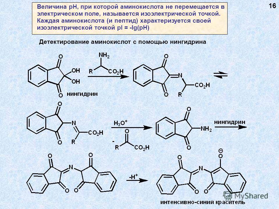 Величина рН, при которой аминокислота не перемещается в электрическом поле, называется изоэлектрической точкой. Каждая аминокислота (и пептид) характеризуется своей изоэлектрической точкой pI = -lg(pH) Детектирование аминокислот с помощью нингидрина