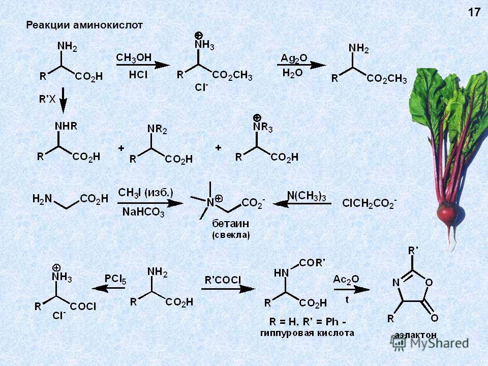Реакции аминокислот 17