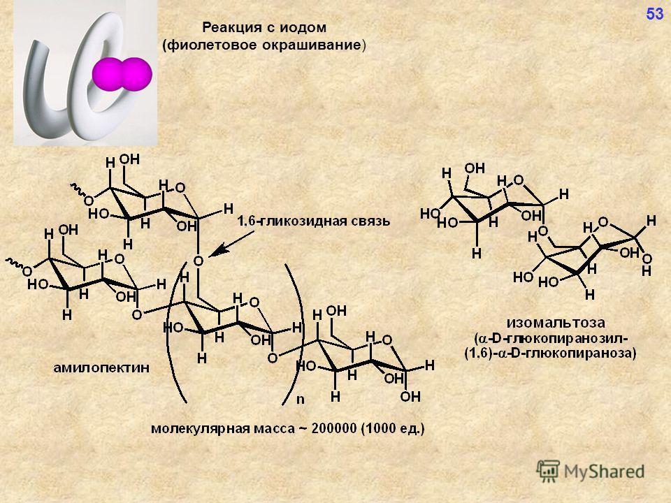 Реакция с иодом (фиолетовое окрашивание) 53