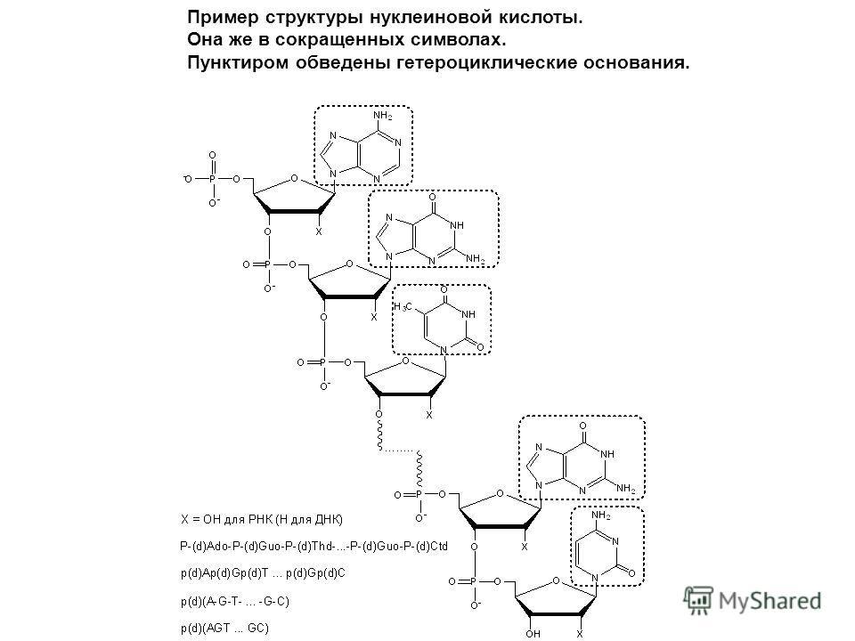 Пример структуры нуклеиновой кислоты. Она же в сокращенных символах. Пунктиром обведены гетероциклические основания.