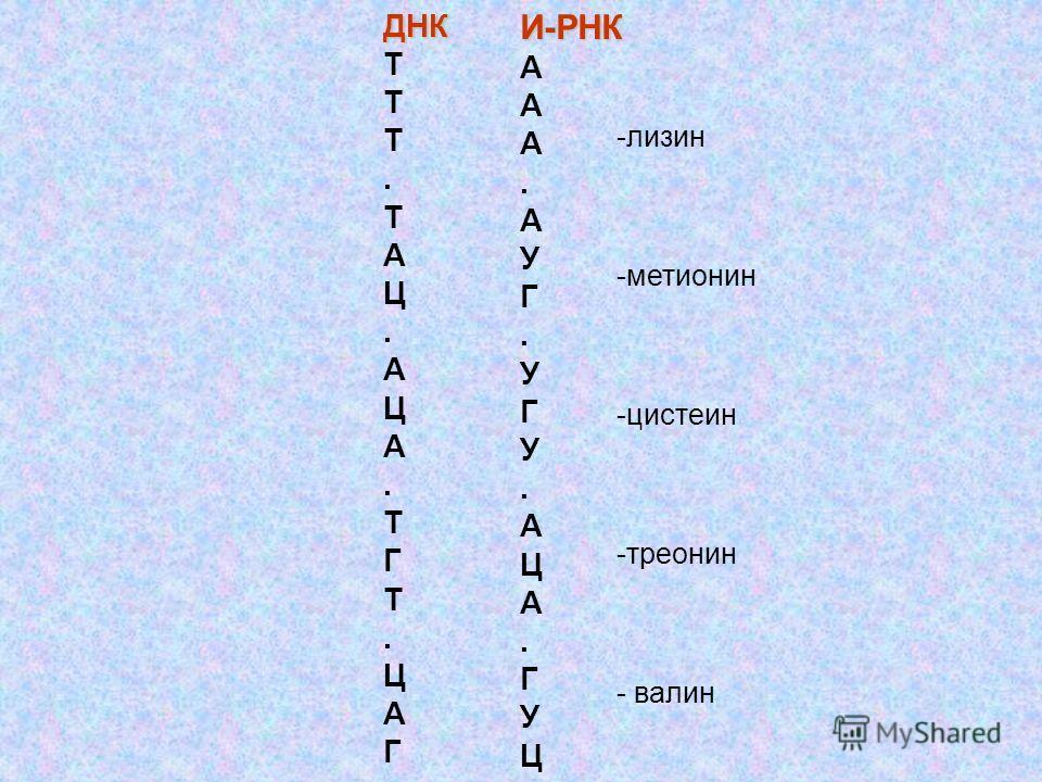 ДНК Т. Т А Ц. А Ц А. Т Г Т. Ц А ГИ-РНК А. А У Г. У Г У. А Ц А. Г У Ц -лизин -метионин -цистеин -треонин - валин