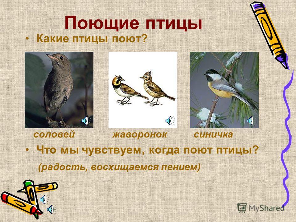 Музыка природы Вы любите музыку? Какая бывает музыка? ( громкая, тихая; быстрая, медленная; классическая, современная) Какая бывает музыка природы? (шелест листьев, звук дождя, шум ветра, пение птиц)