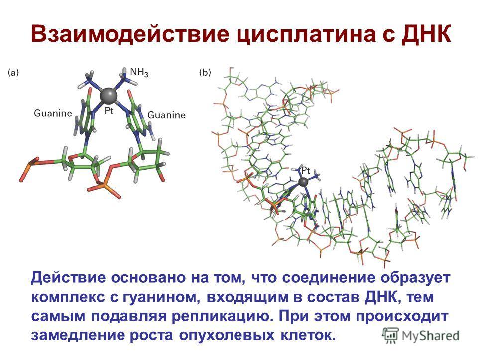 Взаимодействие цисплатина с ДНК Действие основано на том, что соединение образует комплекс с гуанином, входящим в состав ДНК, тем самым подавляя репликацию. При этом происходит замедление роста опухолевых клеток.