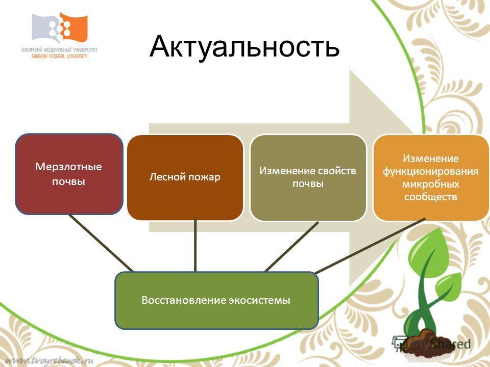 Актуальность Лесной пожар Изменение свойств почвы Изменение функционирования микробных сообществ Мерзлотные почвы Восстановление экосистемы