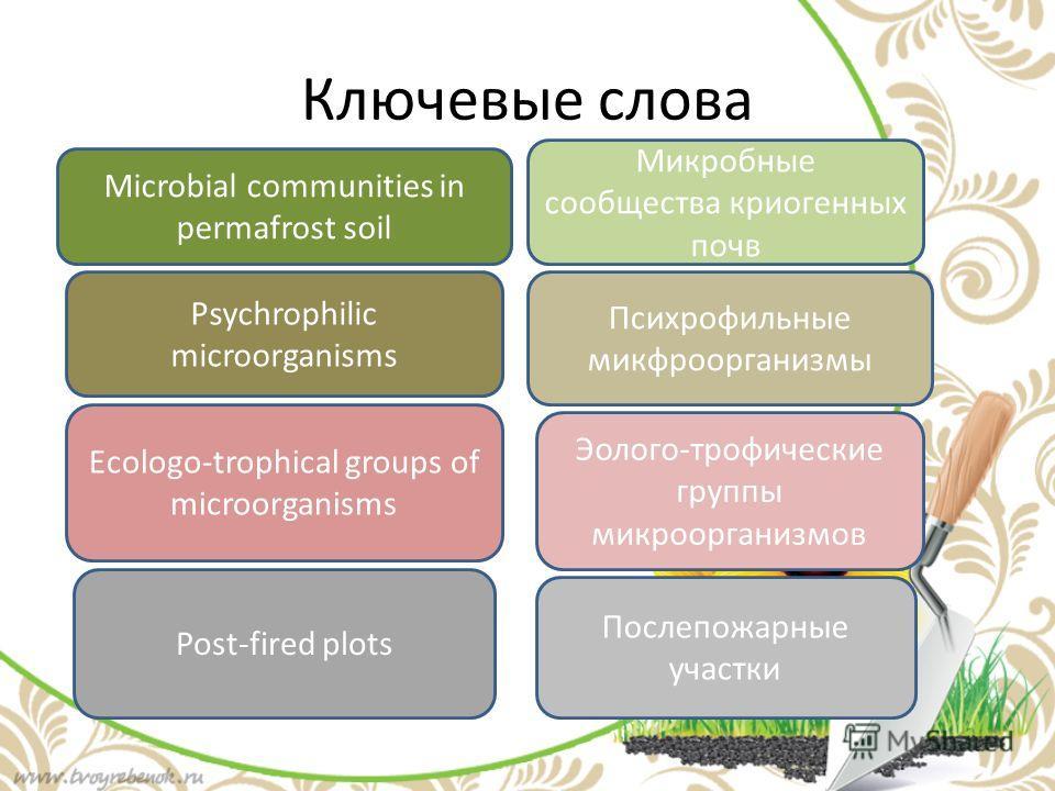 Ключевые слова Microbial communities in permafrost soil Микробные сообщества криогенных почв Psychrophilic microorganisms Психрофильные микфроорганизмы Ecologo-trophical groups of microorganisms Эолого-трофические группы микроорганизмов Post-fired pl