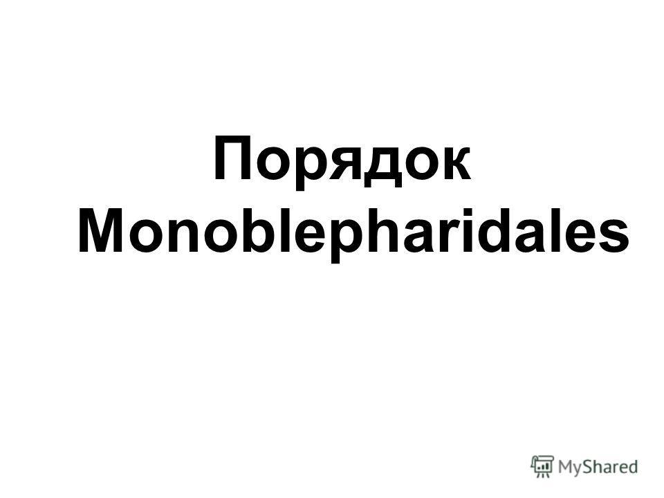 Порядок Monoblepharidales