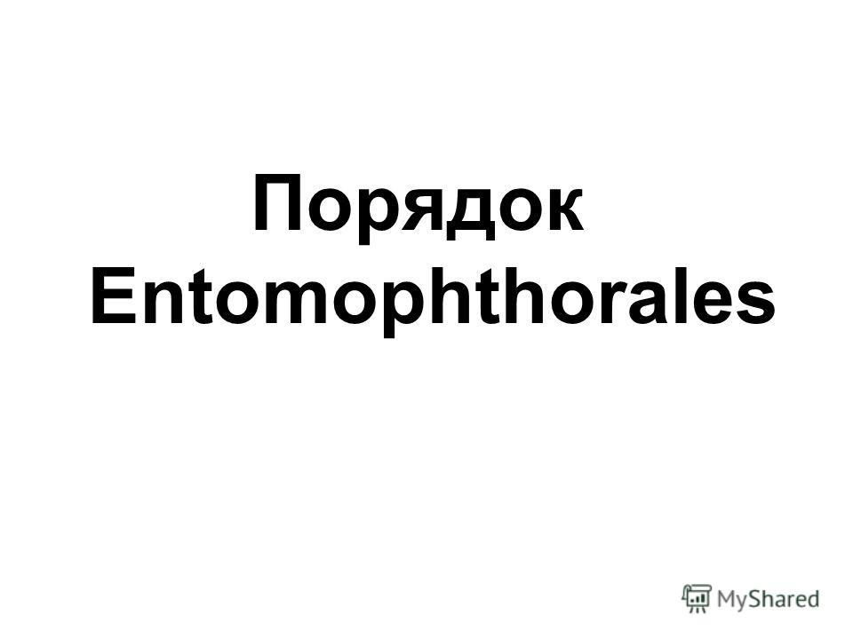 Порядок Entomophthorales