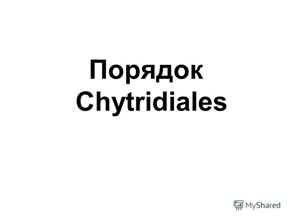 Порядок Chytridiales