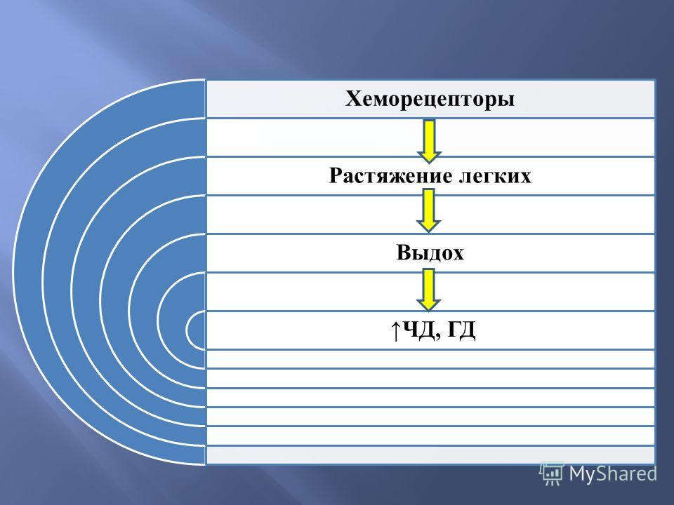 Хеморецепторы Растяжение легких Выдох ЧД, ГД