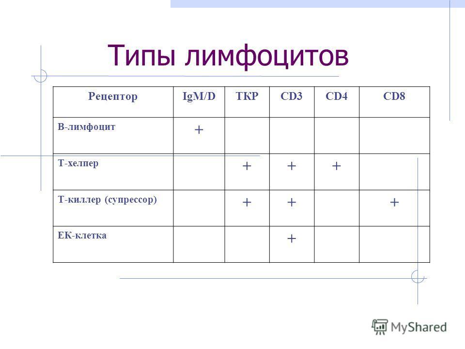 Типы лимфоцитов РецепторIgM/DТКРCD3CD4CD8 B-лимфоцит + Т-хелпер +++ Т-киллер (супрессор) +++ ЕК-клетка +
