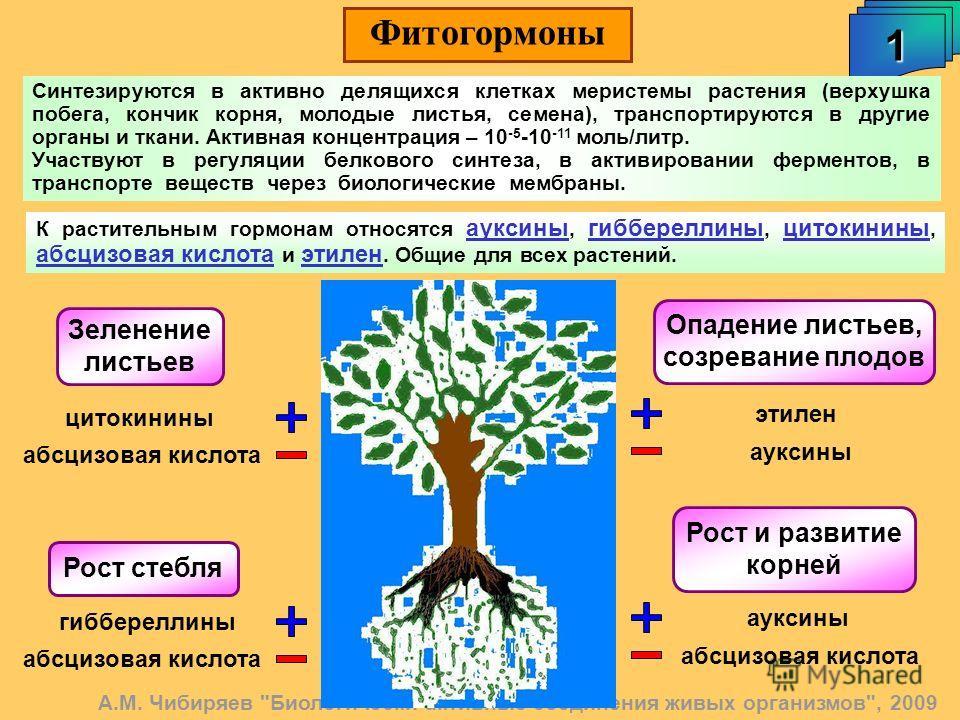 Фитогормоны 1 А.М. Чибиряев