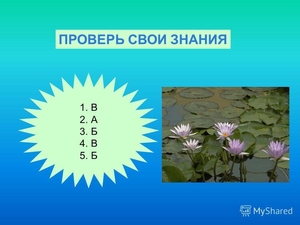 ПРОВЕРЬ СВОИ ЗНАНИЯ 1.В 2.А 3.Б 4.В 5.Б