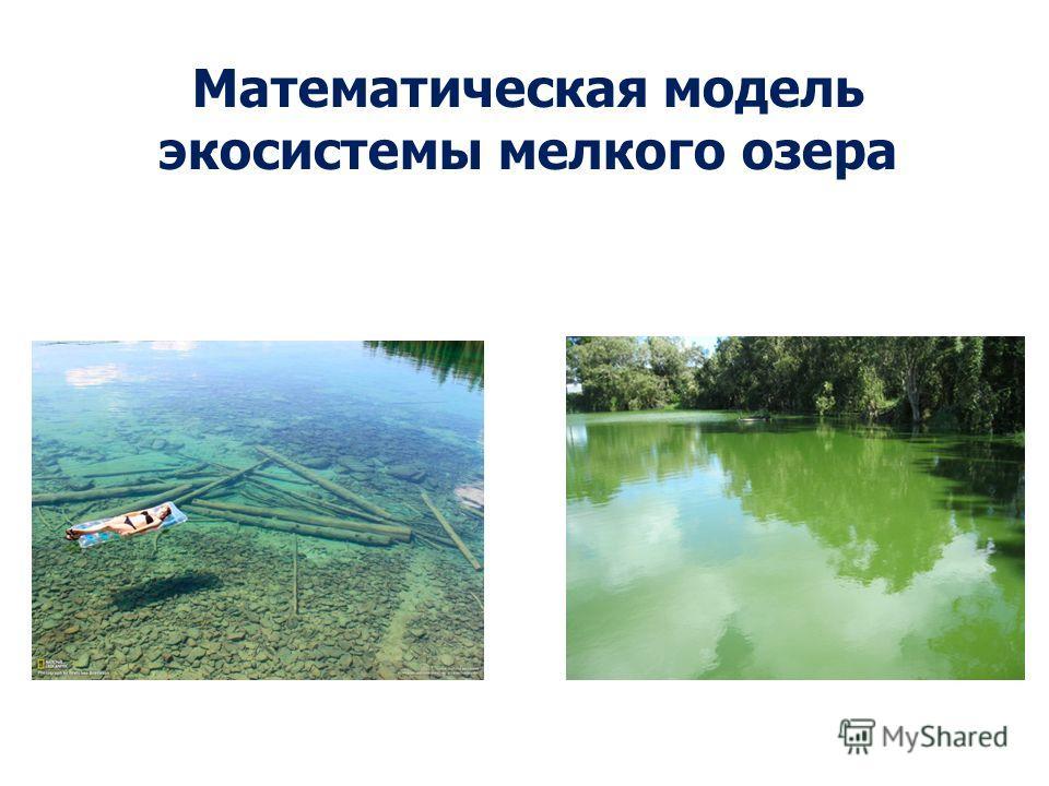 Математическая модель экосистемы мелкого озера