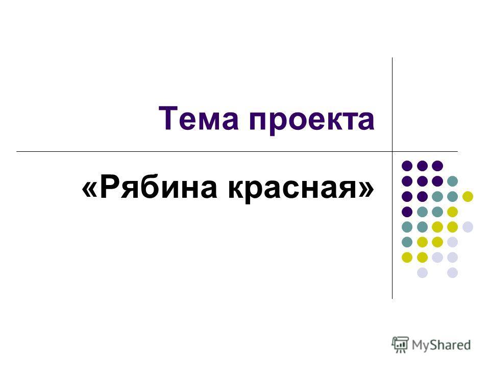 Тема проекта «Рябина красная»