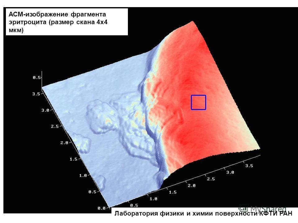 Лаборатория физики и химии поверхности КФТИ РАН АСМ-изображение фрагмента эритроцита (размер скана 4х4 мкм)