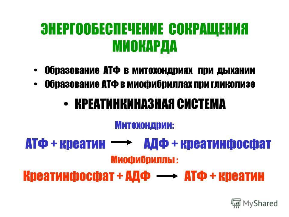 ЭНЕРГООБЕСПЕЧЕНИЕ СОКРАЩЕНИЯ МИОКАРДА Образование АТФ в митохондриях при дыхании Образование АТФ в миофибриллах при гликолизе КРЕАТИНКИНАЗНАЯ СИСТЕМА Митохондрии: АТФ + креатин АДФ + креатинфосфат Миофибриллы : Креатинфосфат + АДФ АТФ + креатин