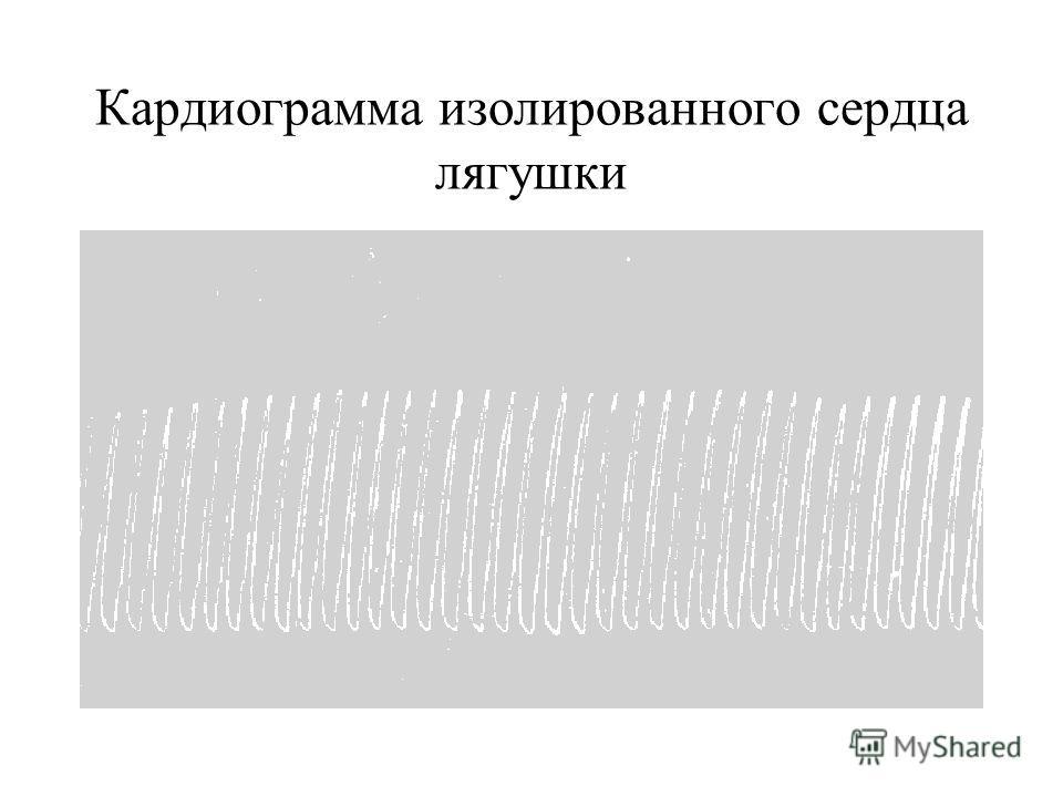 Кардиограмма изолированного сердца лягушки