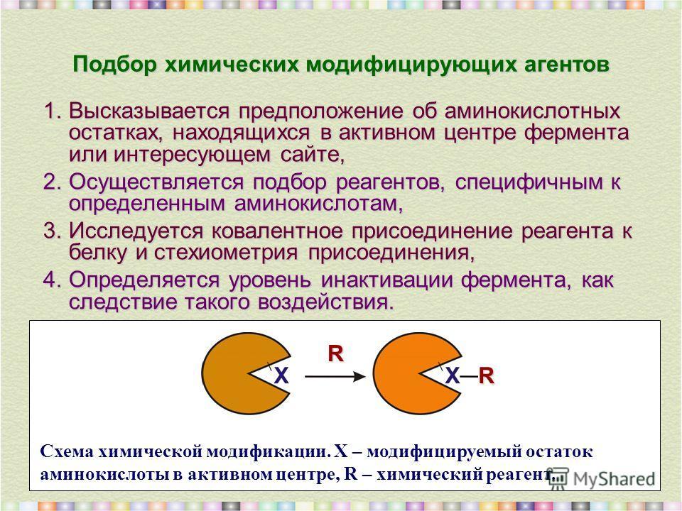 Подбор химических модифицирующих агентов 1.Высказывается предположение об аминокислотных остатках, находящихся в активном центре фермента или интересующем сайте, 2.Осуществляется подбор реагентов, специфичным к определенным аминокислотам, 3.Исследует