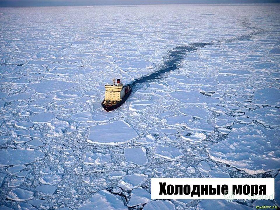 Холодные моря