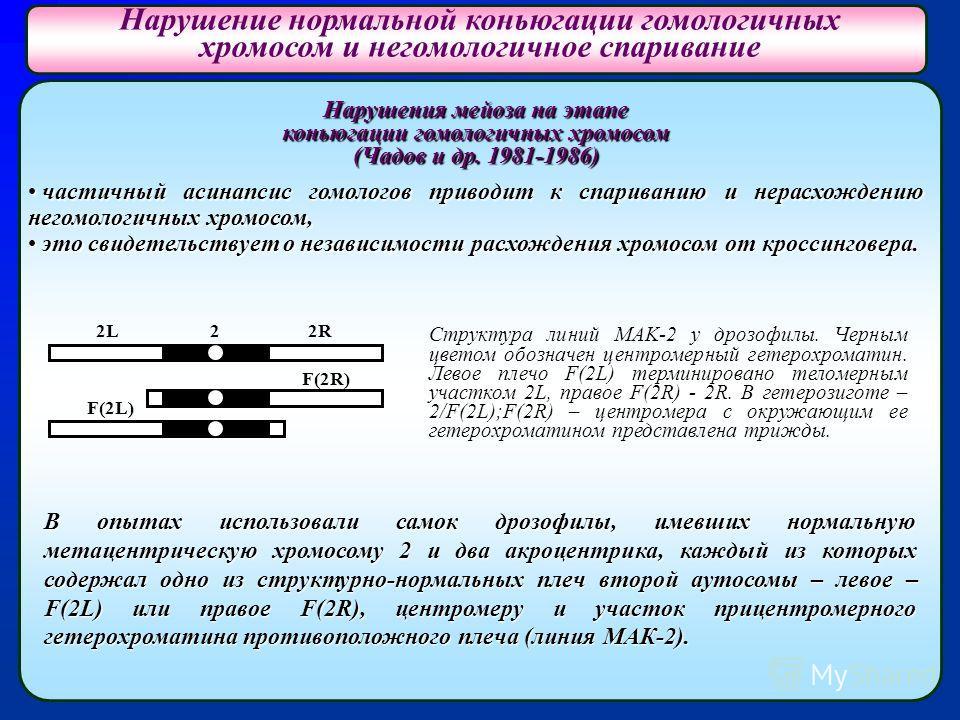 Нарушения мейоза на этапе коньюгации гомологичных хромосом (Чадов и др. 1981-1986) частичный асинапсис гомологов приводит к спариванию и нерасхождению негомологичных хромосом, частичный асинапсис гомологов приводит к спариванию и нерасхождению негомо