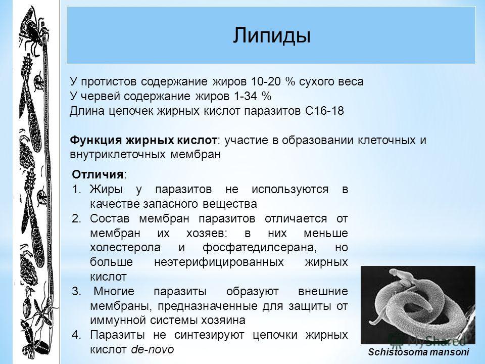 Липиды Schistosoma mansoni У протистов содержание жиров 10-20 % сухого веса У червей содержание жиров 1-34 % Длина цепочек жирных кислот паразитов С16-18 Функция жирных кислот: участие в образовании клеточных и внутриклеточных мембран Отличия: 1.Жиры