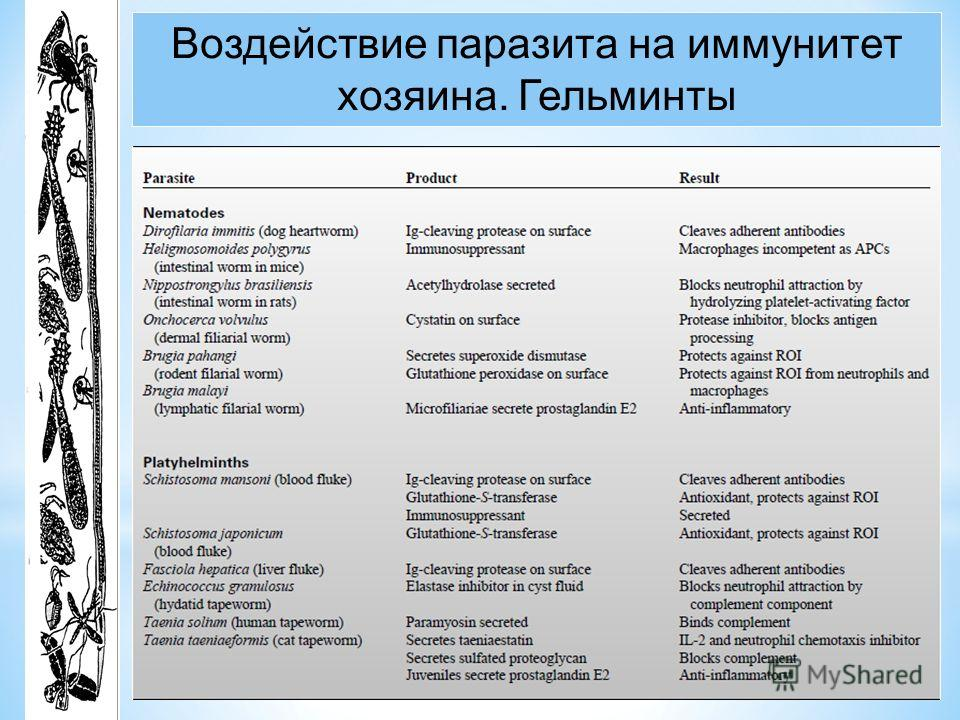 Воздействие паразита на иммунитет хозяина. Гельминты